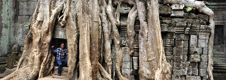 Angkor jungle temple Ta Prohm Tetrameles tree in third enclosure