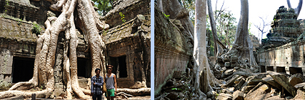 Ta Prohm trees